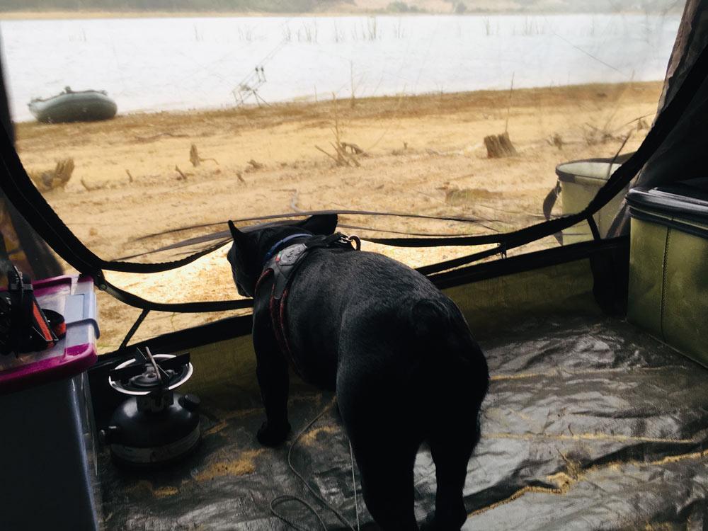 hund-im-zelt